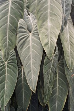 washed leaves