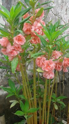 Flower Plants, My Flower, Planting Flowers, Exotic Flowers, Beautiful Flowers, Virtual Flowers, Rare Plants, Belleza Natural, Cool Plants