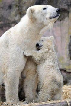 Polar Bear Hugs. Love!