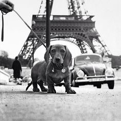 Dog and Eiffel Tower