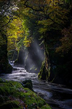 the forest of fairy glen in conwy, north wales, photo by tony.