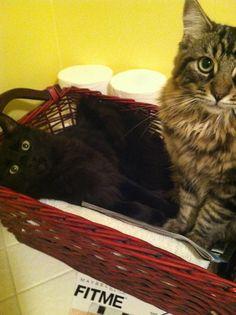 relaxing in the towel basket