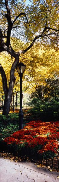 'Lamppost in Central Park, New York City by Panoramic Images