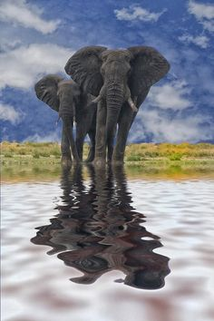 Like the water for the elephants, when you see your reflection, you will also see that the two of you are always there for each other.