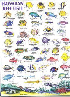 hawaiian reef fish guide types of fish hawaiian names 1608x2204 Fishing Tips Hawaii