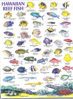 This is a coral reef fish species chart so you know what for Types of fish in hawaii