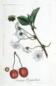 Botanical - La Flore Des Environs De Paris -  (48)