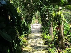 Photo by Oscar de la Renta of his gardens in Punta Cana. Order The Style, Inspiration, and Life of Oscar de la Renta on oscardelarenta.com.