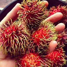 Afternoon snack - Rambutan. Bangkok. (Had it. it is very sweet and addicting, in a good way. Despite it's sweetness it is very low in calories. I LOVE this fruit.)
