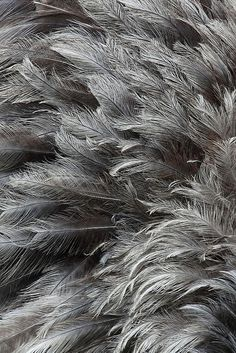 Grey Feathers - natu