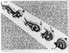 """""""Curl-up"""" or """"Wentelteefje"""" (original Dutch title) - Lithograph print by M. C. Escher, first printed in November 1951. This is the only work by Escher which consists largely of text. The text, which is written in Dutch, describes an imaginary species called Pedalternorotandomovens centroculatus articulosus, also known as """"wentelteefje"""" or """"rolpens""""."""