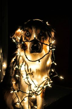 poor thing all tangled up in lights  lol...but so cute!