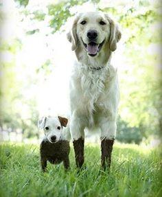 ~puddlebuddies~