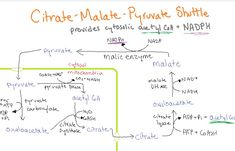 Biochemistry Handwritten Notes For Usmle Step 1