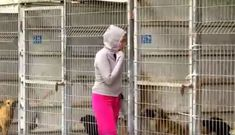 For the love of animals. Pass it on.Woman Can't Decide Which Dogs To Save … So She Buys The Entire Shelter