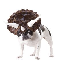 Distant cousin to boston terriers & french bulldogs - the tricerasnort.    They were known to release horrible smells to fend off predators. And it's name is Rocky!!
