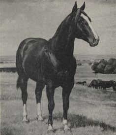 Leo Horse | The Story of Leo the AQHA Stallion – America's Horse Daily