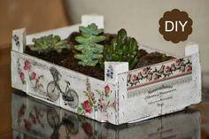 Reciclaje caja de fruta. DIY jardín de crasas
