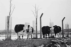 Mudchute farm 1982 Isle Of Dogs, Old London, Where The Heart Is