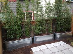 Metal Planters--Galvanized Raised Beds - contemporary - Landscape - Seattle - WEdesign Inc Privacy Planter, Bamboo Planter, Bamboo Trellis, Raised Planter, Planter Boxes, Metal Wall Planters, Galvanized Planters, Trough Planters, Galvanized Metal