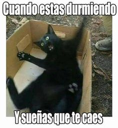 Are you looking for really funny black cat memes? Look no further, we've gathered funny black cat memes just for you to share on your social media accounts Cute Cat Memes, Funny Animal Jokes, Funny Dog Memes, Crazy Funny Memes, Really Funny Memes, Cute Funny Animals, Funny Animal Pictures, Memes Humor, Stupid Funny Memes