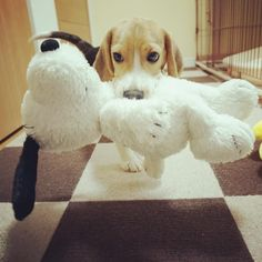 Snoopy lovin' time!