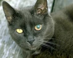 Cat Eye Problems On Pinterest Cat Cancer And Cat Eyes