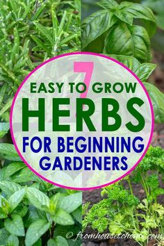This list of the best easy to grow herbs is the best! I love all the tips that will make herb gardening simple even for beginners.  Ill definitely be adding some herb plants like mint, parsley and rosemary to my garden landscape this year. #fromhousetohome #gardeningtips #gardenideas  #herbs