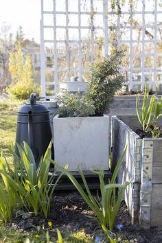 Oravankesäpesä: KORONAVAPPU 2020. Plants, Flora, Plant, Planting