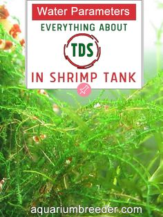Water Parameters: Everything about TDS in Shrimp Tank  Aquarium, Dwarf shrimp, freshwater crabs, crayfish, fish, snails, care, maintenance, problems, treatment, measure, test kit.