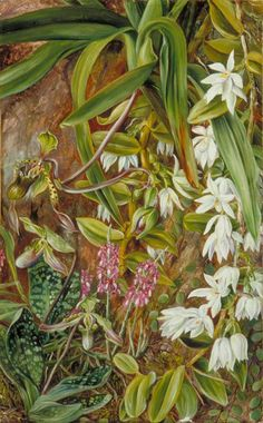 Art UK is the online home for every public collection in the UK. Vintage Botanical Prints, Botanical Art, Plant Illustration, Botanical Illustration, Beautiful Paintings Of Flowers, Marianne North, Hawaiian Art, Art Uk, Bird Art