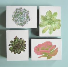 Succulent Paintings Echeveria 3 blue curly 5x7
