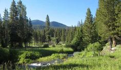 Slough Creek Campground | Yellowstone National Park