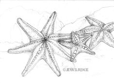 Right here you'll find a lot of totally free Starfish Drawing Pencil. Description from coloringpagesjos.net. I searched for this on bing.com/images