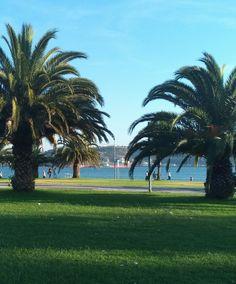 Palmeiras #belem #diadesol #sun #paisagem #ceu #walk #light #sky #afternoon #portugal #palmeiras #palmtrees #feelslikesummer #summer #summerdays #river #RioTejo