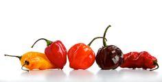 Frightening fire, in a super-hot pepper   The Columbian