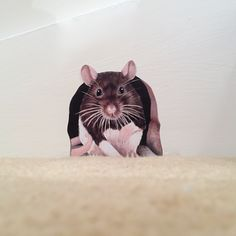 Ratty rat wall decal by Paws by Sue Mclearie Diy Wall Stickers, Removable Wall Stickers, Nursery Wall Decals, Vinyl Wall Art, Indian Art Paintings, Original Paintings, Rats, Animals, Robin