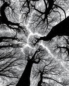 "500px / Photo ""Reaching for the Sky"" by Petri Damstén"