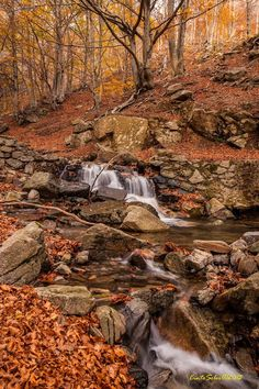 Tardor al Parc Natural del Montseny. Aprofitant el fantàstic estiuet de Sant Martí és temps de sortir a gaudir de la natura! #setdimatge 13/11/2015 #mesdimatge http://www.festes.org/articles.php?id=583