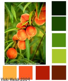 Peaches and Pears Color Palette