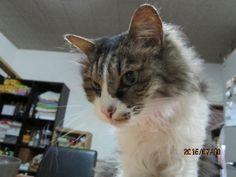 里親さんブログモナカ婆ちゃん逝く - http://iyaiya.jp/cat/archives/69289