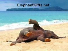 Visit ElephantGifts.net for more funny elephant photos and videos Animals And Pets, Baby Animals, Funny Animals, Cute Animals, Wild Animals, Nature Animals, Beautiful Creatures, Animals Beautiful, Animal Pictures