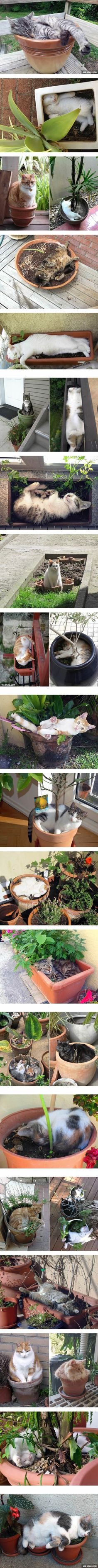 These are the plants that you probably shouldn't water. Or more proofs that cats are liquid.
