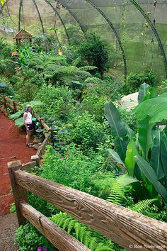 Butterfly Observatory at La Paz Waterfall Gardens, Costa Rica, is the largest in the world. Photo: Ron Niebrugge