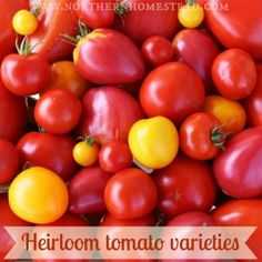 Heirloom tomato varieties we grow in a northern garden. This is our sixth year of growing tomatoes in Alberta, a challenging and fun thing to do.