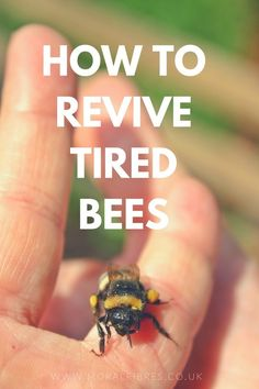 How To Revive Tired Bees! #Bees