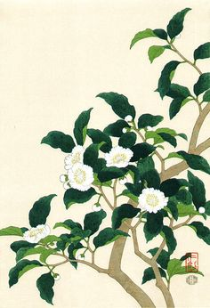 Itou Nisaburo (1910-1988) 伊藤仁三郎 Tea Flowers, late 20th cent.