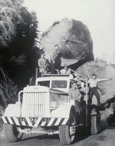 Peterbilt logging truck from 1950 Giant Tree, Big Tree, Cool Trucks, Big Trucks, Semi Trucks, Pickup Trucks, Old Pictures, Old Photos, Vintage Photographs