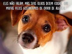 E DIZEM MESMO ❤️❤️ #cachorroétudodebom  #boanoite  #gato  #amocachorro  #amoanimais  #filhode4patas  #petmeupet  #cachorro  #gato