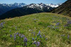 Gray Wolf Ridge Gray Wolf, Grey, Mountaineering, Climbing, Hiking, Mountains, Nature, Travel, Gray